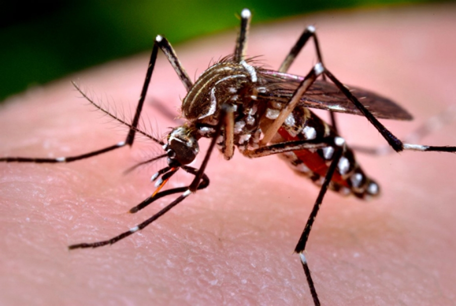 Health ministry monitoring mysterious virus