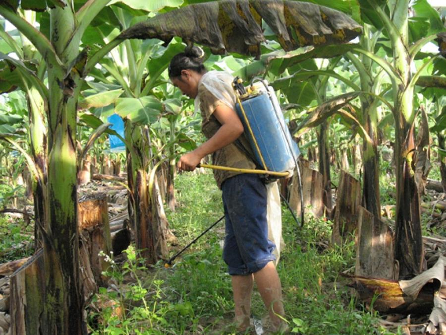 Meeting on dangerous herbicide
