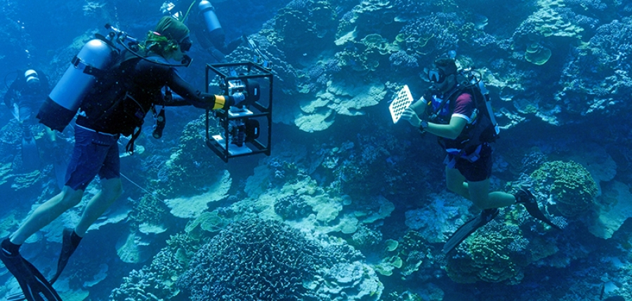 Cook Islanders on front line of world coral reef challenge