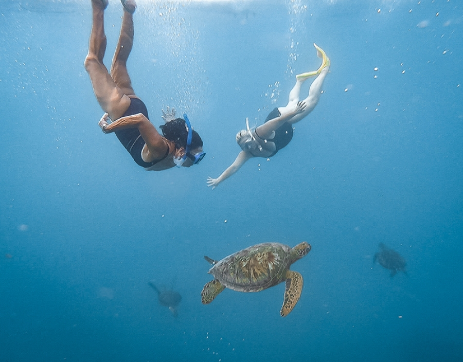 Turtle tour magical experience