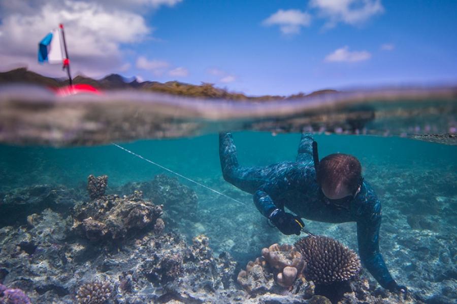 Hot water kills reef 'solar panels'