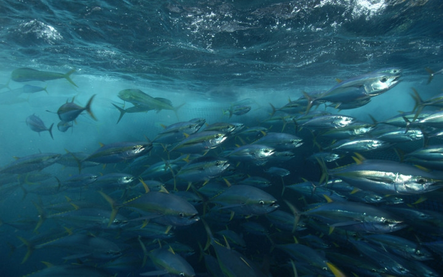 Local participation in regional fisheries meet