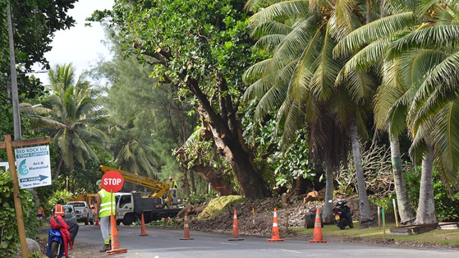 170-year-old utu trees cleared to widen road