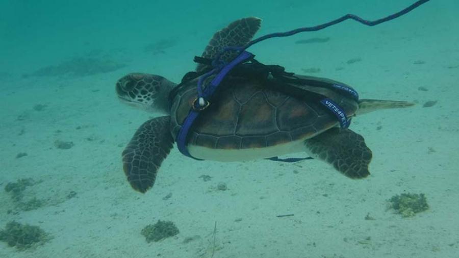 Kids prepare for turtle's release