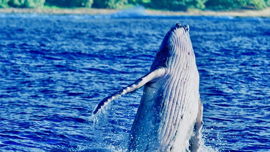 2020 unusual season for whale researchers
