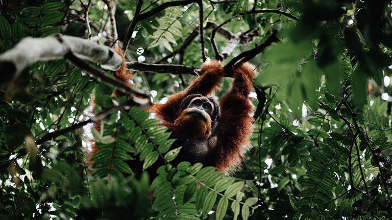 Sumatra: The last place on Earth