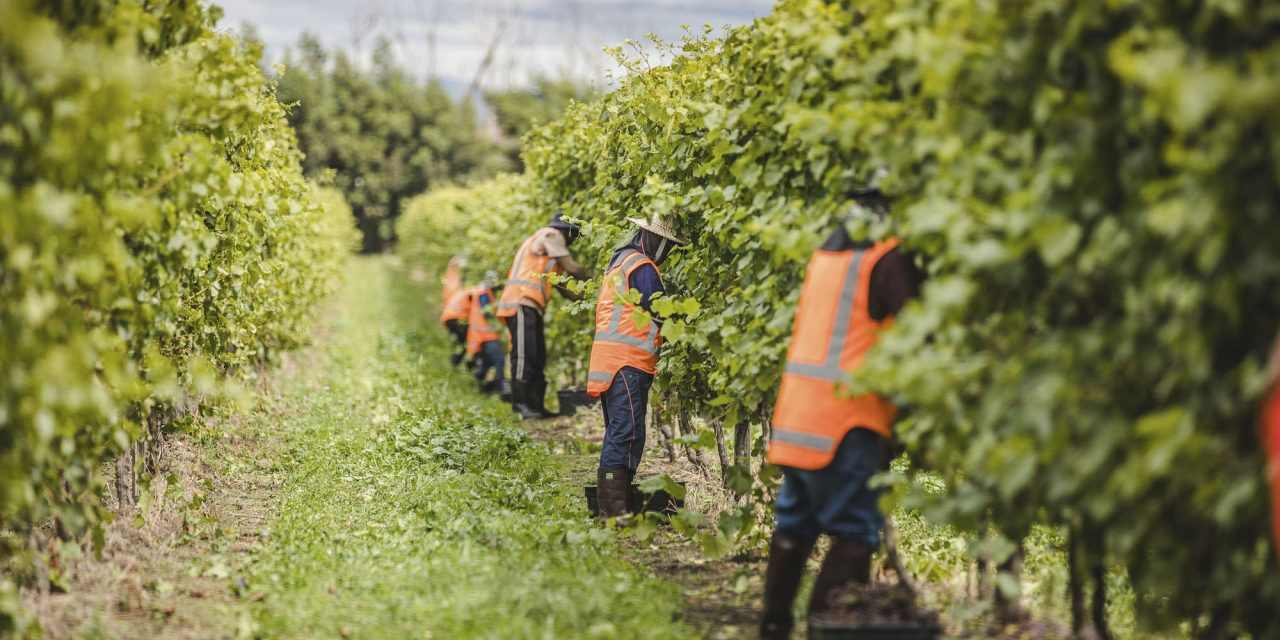 Who picks the fruit? A look at the role of seasonal workers in NZ