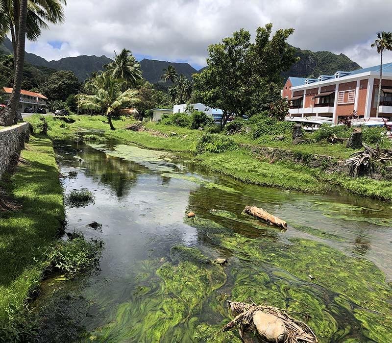 Algae growth in Rarotonga's streams is baffling officials