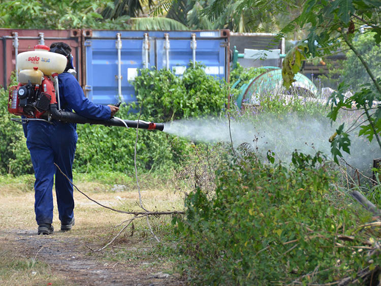 Dengue likely to have no effect on potential travel bubble, government says