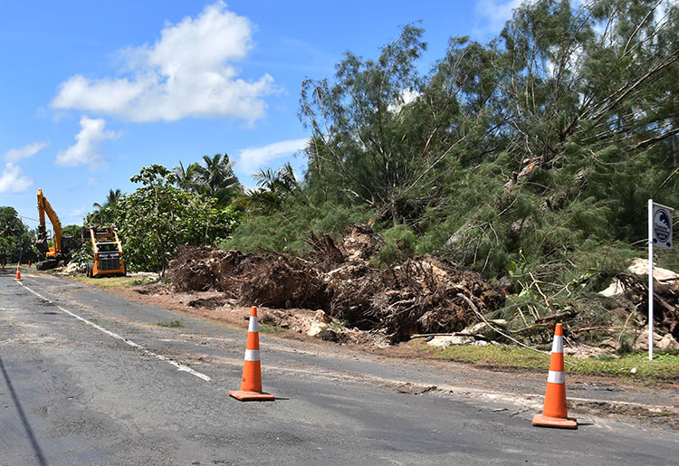 Government begins removing beloved toa trees in Matavera
