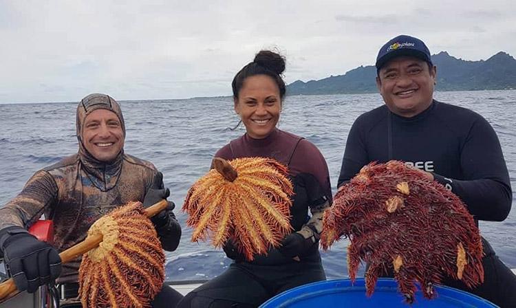Saving Rarotonga's reef from the 'spiky thing'