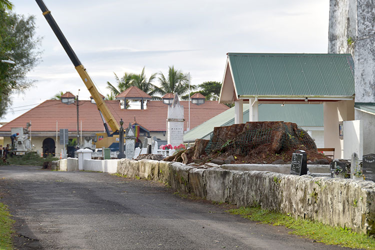 Landowners stunned as toa trees removed by church